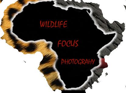 Wildlife Focus Photography