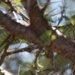 boomslang late afternoon