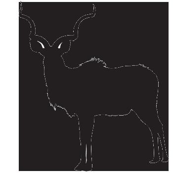 kudu African antelope
